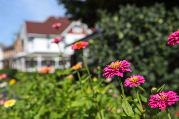 Image of garden flowers in a small town, with a house in the background.