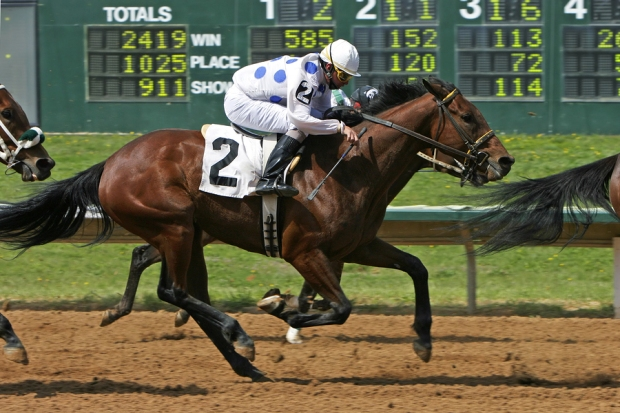 Thoroughbred Race Horse in front of the scoreboard near the finish line of a race