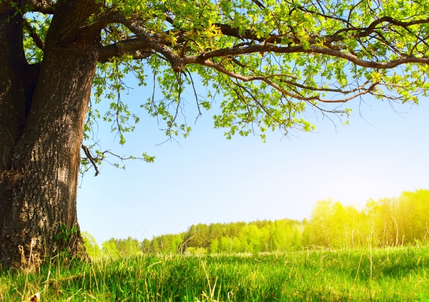 Close up of tree in a meadow on a sunny day